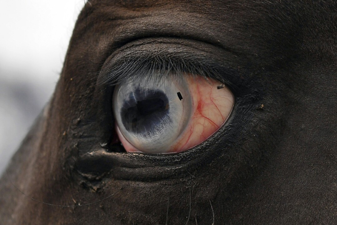 Debris from a fire is in the eye of a horse in Vacaville, Calif.