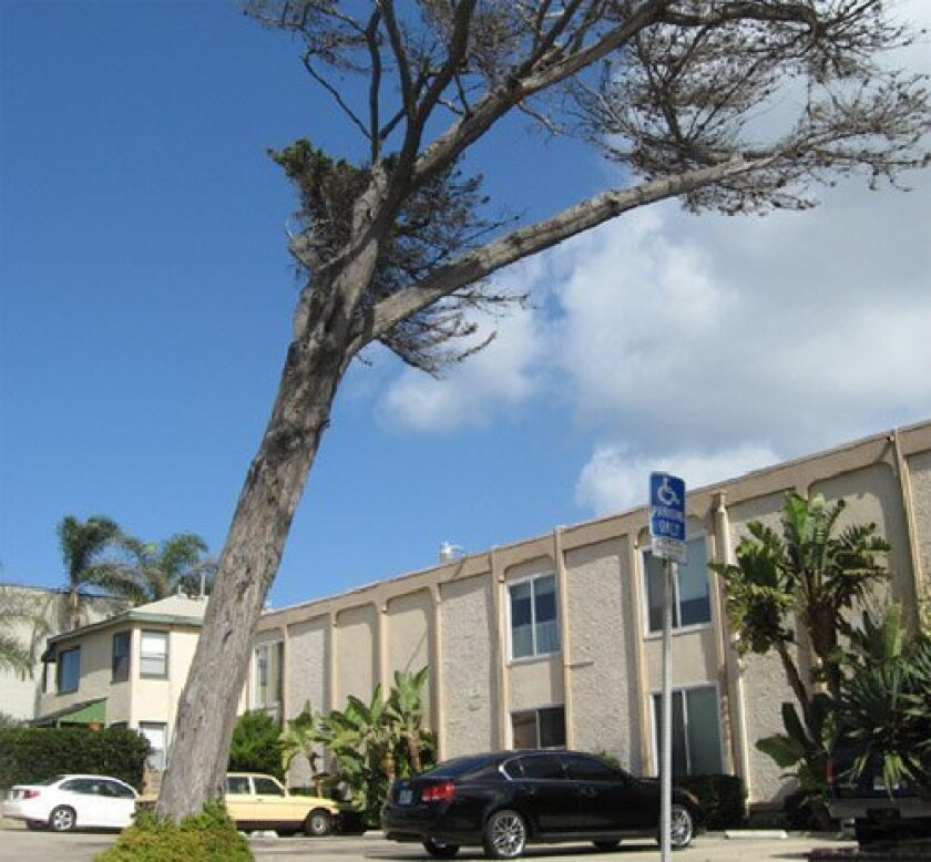 <strong>THE SITE:</strong> Del Mar Avenue, Ocean Beach