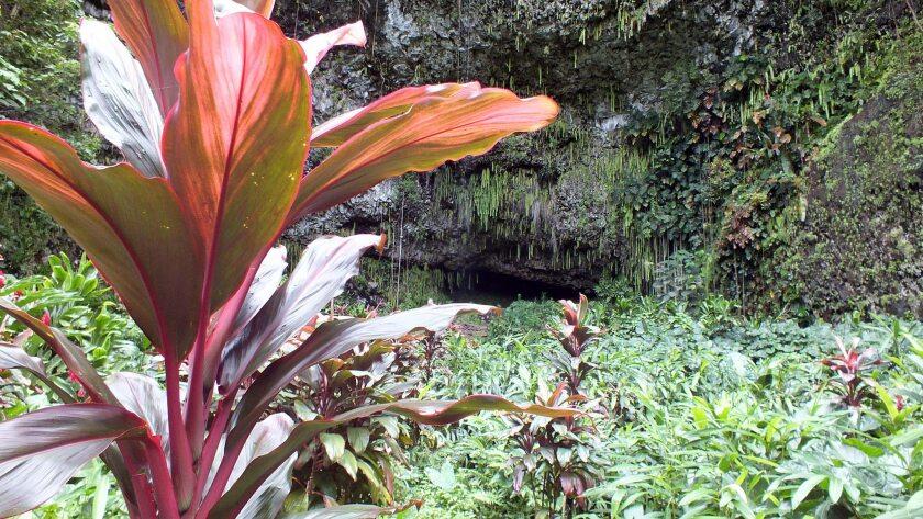 Smith's Fern Grotto tours in Kauai, Hawaii