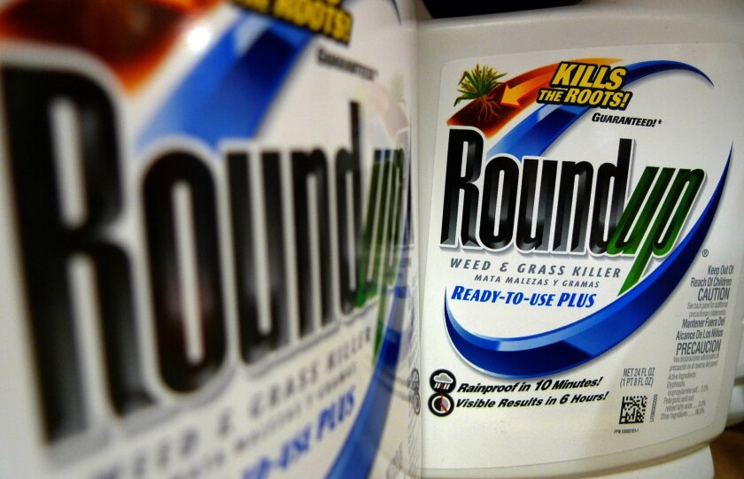 FILE - This June 28, 2011, file photo shows bottles of Roundup herbicide, a product of Monsanto, on a store shelf in St. Louis. Monsanto Co. reports quarterly financial results on Wednesday, June 24, 2015. (AP Photo/Jeff Roberson, File)