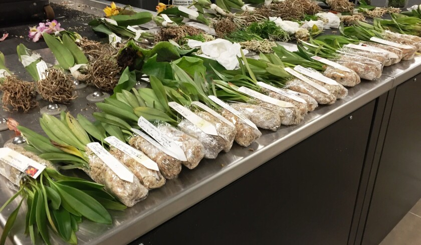 More than 200 protected orchids were found in a man's luggage at Los Angeles International Airport.