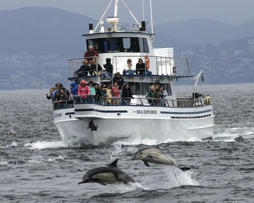 Dolphins alongside Ocean Institute's Research Vessel Sea Explorer