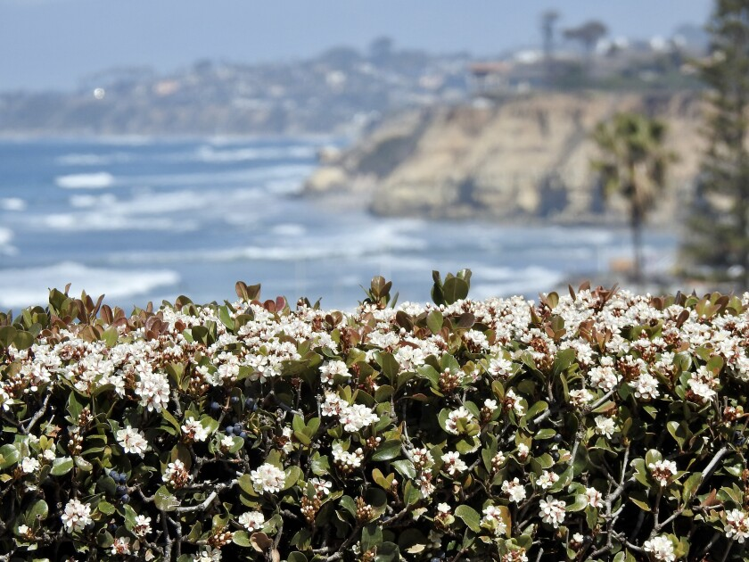 The view from Del Mar