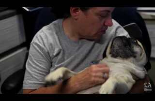 Visit the Pug Nation Rescue