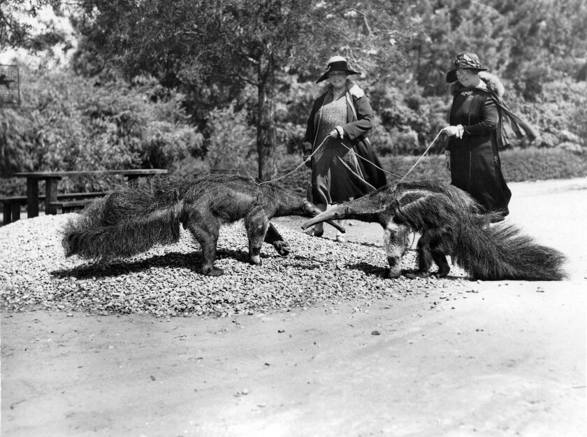 Eventful century: How San Diego Zoo evolved into a giant