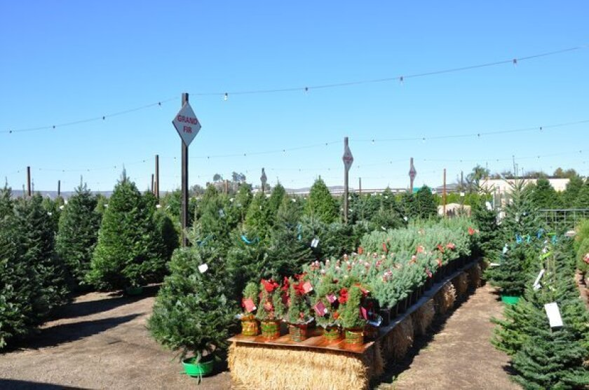 Family Christmas Tree Farm is one of four cut-your-own tree farms in San Diego County.