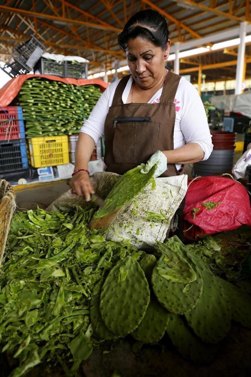 El consumo del nopal genera beneficios para la salud, como promover mayor tolerancia a la glucosa, aumentar la capacidad antioxidante y reducir los niveles de colesterol, dijo hoy el investigador Patrick Mailloux Salinas. EFE/ARCHIVO