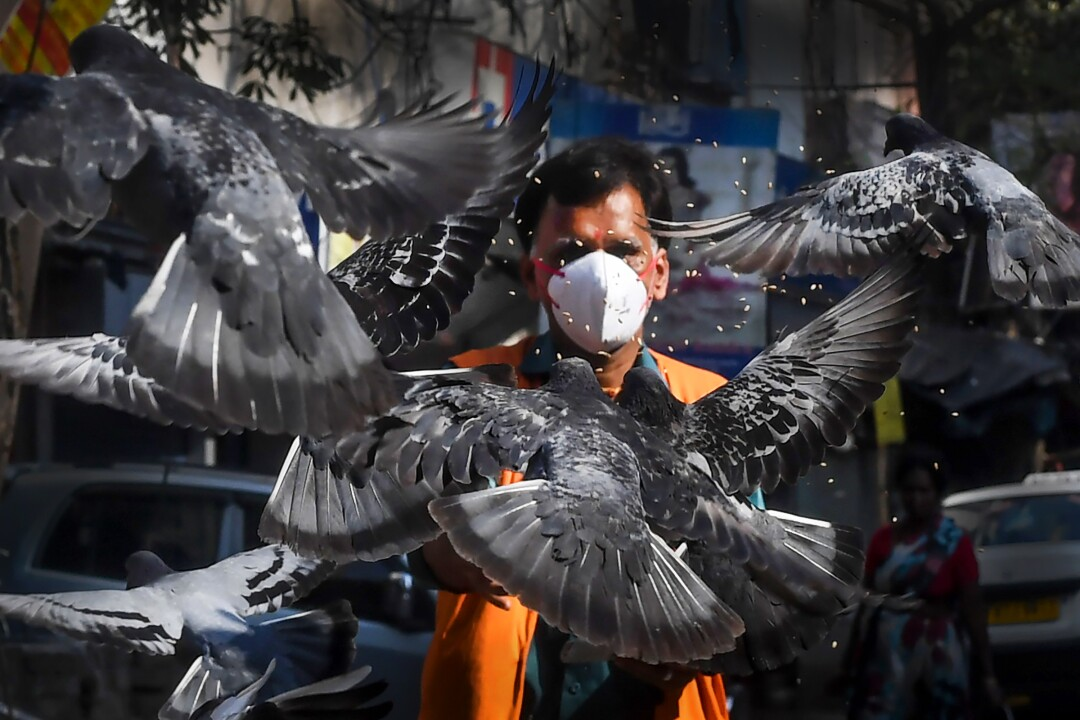INDIA: A man wearing a facemask feeds pigeons on a empty street during a 21-day government-imposed nationwide lockdown as a preventive measure against the COVID-19 coronavirus in Kolkata on March 26, 2020.