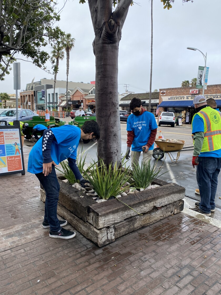 Volunteers placed rocks and new plants in tree wells in The Village on Enhance La Jolla Day on March 20.