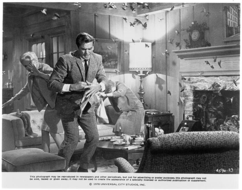 "Tippi Hedren, Rod Taylor and Jessica Tandy are bombarded in Alfred Hitchcock's ""The Birds."""