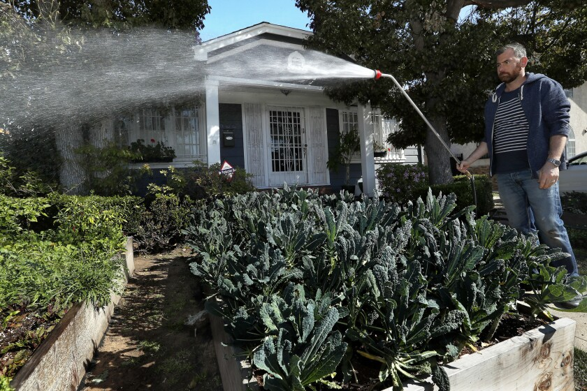 Kevin Meehan waters the plants in an urban garden located in the front yard of a home near his restaurant.