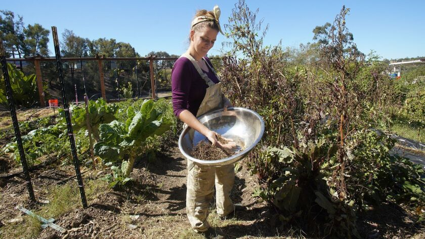 Brijette Pena, collects seed from her certified organic garden.