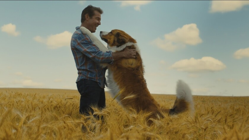 (from left) – Ethan (Dennis Quaid) and Bailey as Buddy, a Great Pyrenees Bernese Mountain Dog (voi