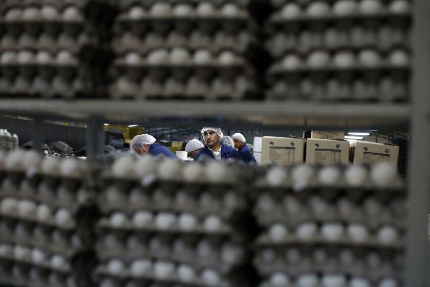 In this Sept. 4, 2015, photo, workers sort eggs at Fuenzalida Moure y Cia Ltda., a Wal-Mart provider in Talca, Chile, where 800,000 hens produce 3.5 million to 4.2 million eggs a week. Pressure from Wal-Mart has forced the family-run egg supplier to cut costs and improve quality, and the relationsh