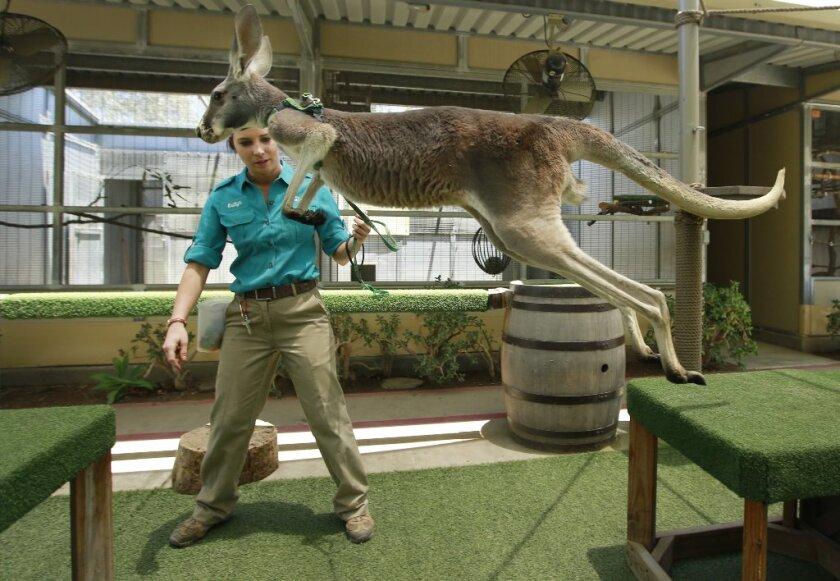 3081303_sd-me-kangaroos-safari-park_011.JPG