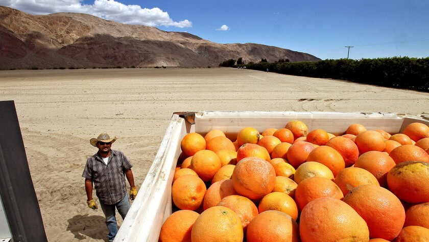 Driver Arturo Romero checks a load of grapefruit at Seley Ranches in the Borrego Valley in 2016, The valley's rapidly shrinking aquifer will require severe cutbacks on water usage by citrus growers and the town of Borrego Springs.