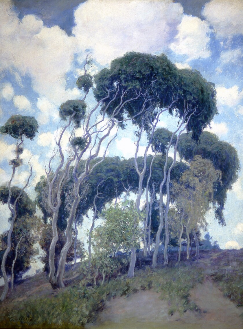 """Laguna Eucalyptus"""