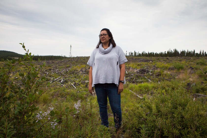 Mandy Gull, deputy grand chief of the Cree Nation, stands in a clear-cut area of the Waswanipi Territory in Northern Quebec. The Cree First Nation of Waswanipi is fighting to protect the last of its intact boreal forest from industrial logging.