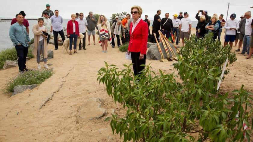 Newport Beach Councilwoman Diane Dixon, pictured at a dedication and planting ceremony Wednesday for