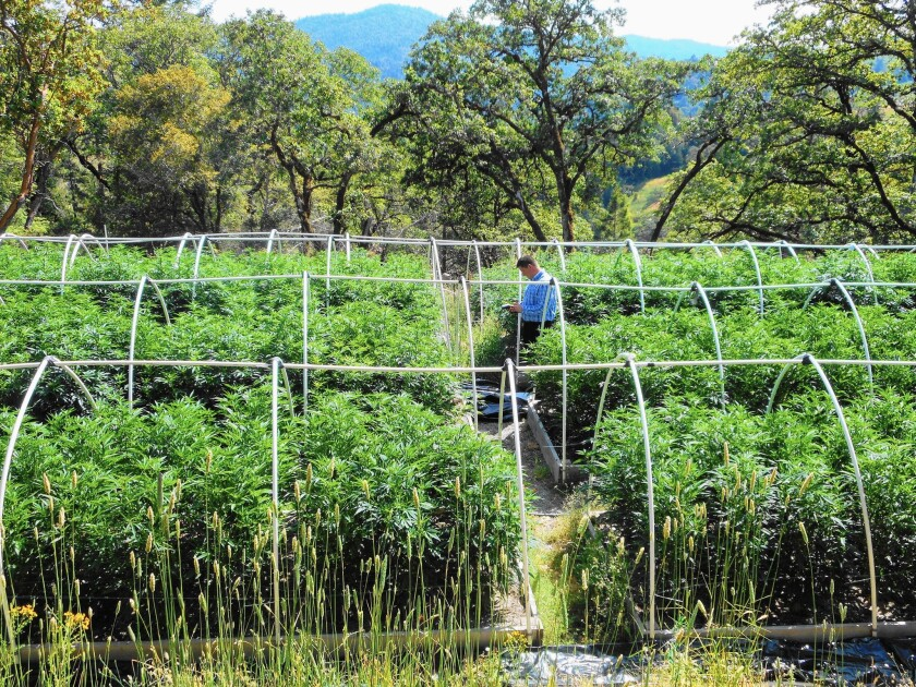 Civil engineer Praj White assesses a site in Humboldt County's Eel River watershed that is home to a marijuana farm. Watershed experts and engineers serve as intermediaries between the state and growers.