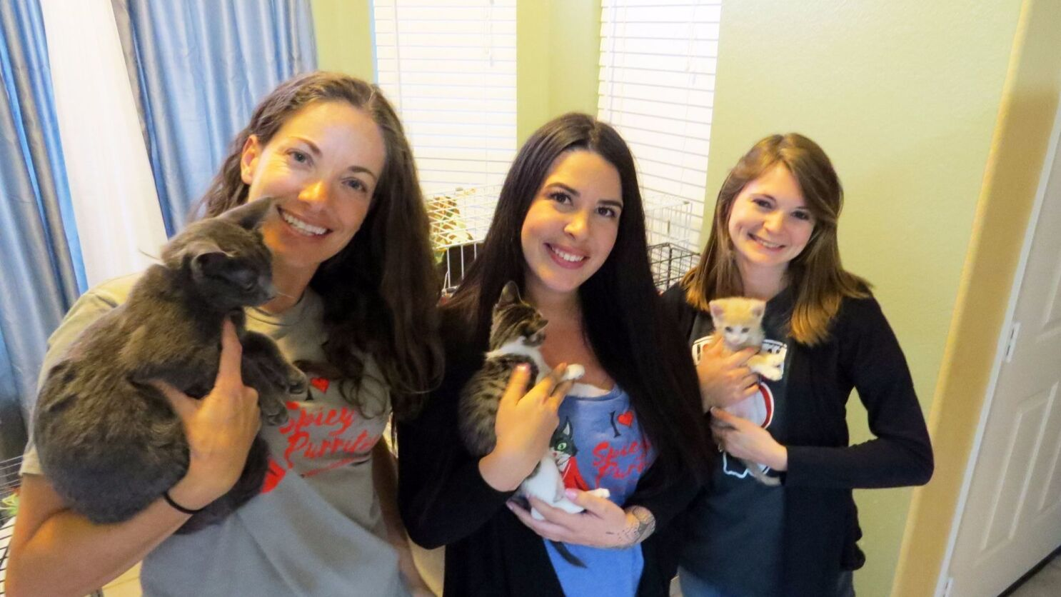 Vista rescue group gives feral cats a fresh start
