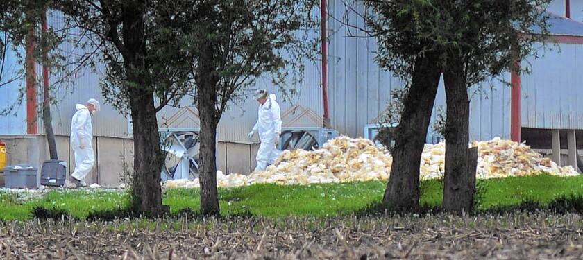 Bird flu hits Iowa