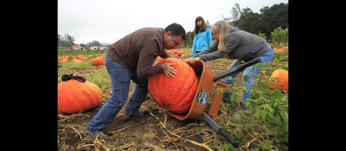 Elias Rodriguez and his wife Deborah Fritts-Rodriguez load the largest pumpkin they could find into a wheelbarrow as their daughter Lauren, 9, watches.