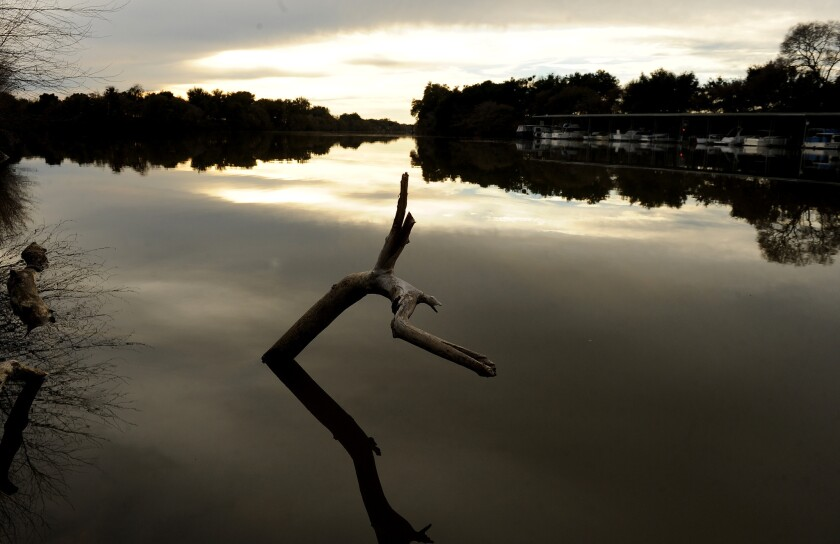 A tree branch sticks out of the water in the Sacramento-San Joaquin Delta. A Superior Court order Friday put a temporary halt to the state's curtailment of junior water rights held by an irrigation district that diverts supplies from the delta.