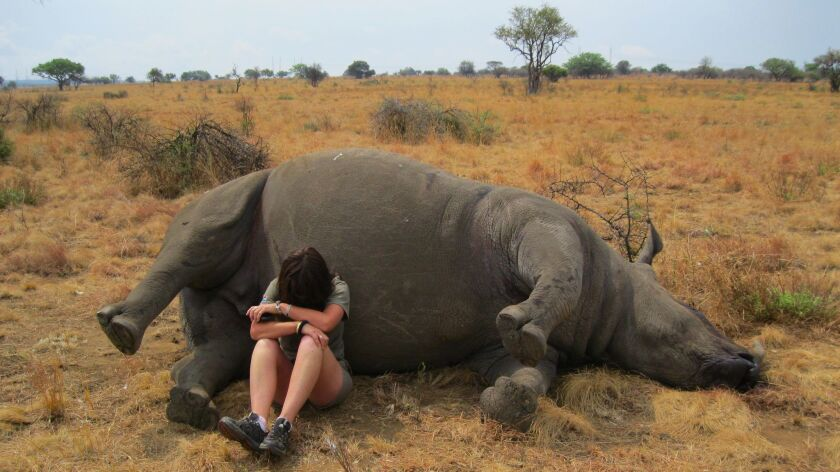When Lynne MacTavish found Winnie, a rhino cow killed by poachers just as she was about to give birt