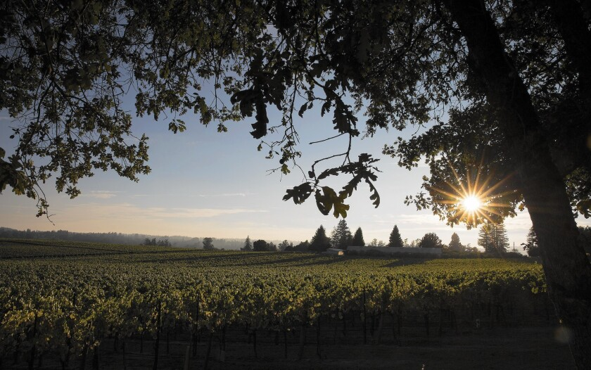 Wineries in Sonoma County, considered agricultural operations, are only now being asked to cut back water use.