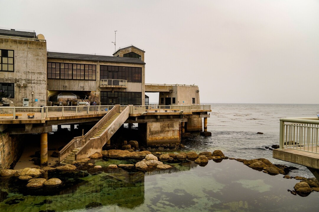 Monterey Bay Aquarium Copes With Covid 19 Financial Woes Los Angeles Times