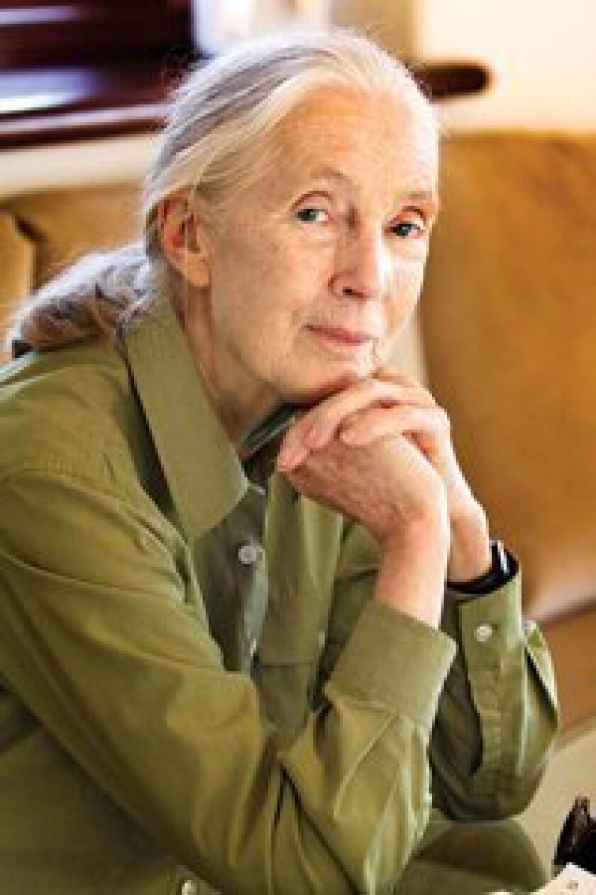 Jane Goodall, founder of the Jane Goodall Institute and a UN Messenger of Peace. Photo/Nancee Lewis