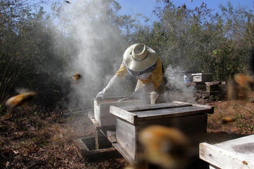 Alianza Maya lucha para proteger abejas de uso de plaguicidas y deforestación