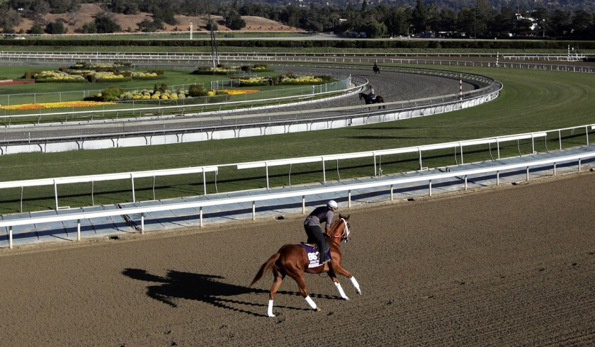 A horse takes part in a training run at Santa Anita Park.