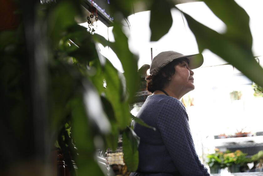 Phuong Hong works at a plant shop in Chinatown
