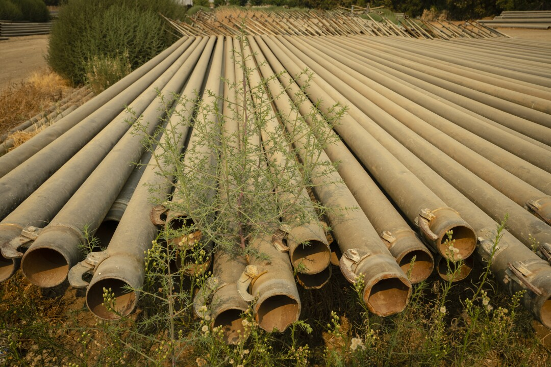 Irrigation pipes lay unused in Cantua Creek.