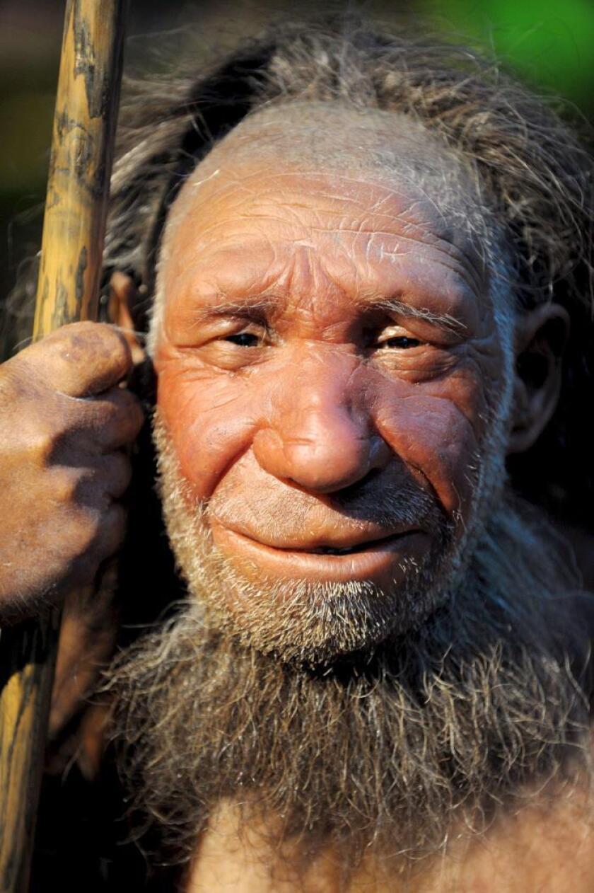 Fotografía de un maniquí de un anciano Neandertal que se exhibe en el museo Neanderthal-Museum de Mettmann, Alemania. EFE/Archivo