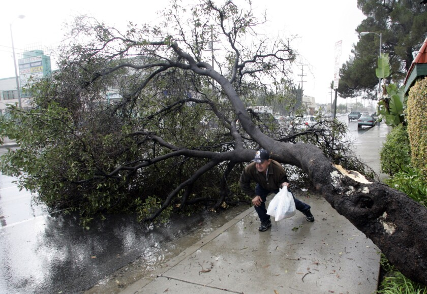 Hugo Alonzo ducks under a tree that had fallen and blocked the sidewalk and part of Sherman Way in Van Nuys in January 2006.