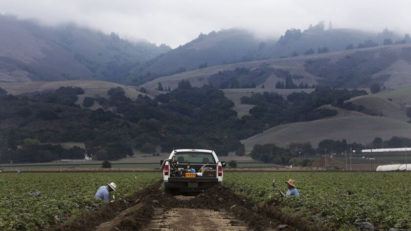 As fog locks in the hillsides, farm workers tend to the fields in San Benito County, Calif. The year's most expensive state legislative race is in the 12th state Senate District, which includes San Benito County and stretches from Fresno to Monterey counties.