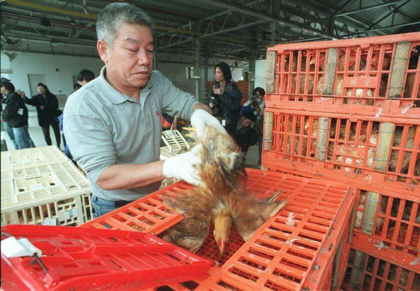 A new analysis of the evolutionary history of China's H7N9 bird flu finds that chickens contracted the virus from ducks, who got it from wild migratory birds.