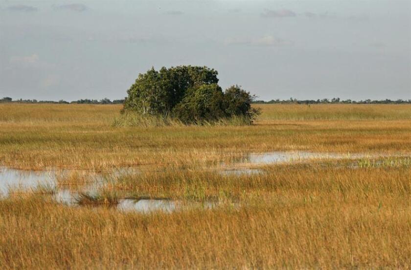 La ciudad costera de Miami, en el sureste de Florida, ha sufrido en este primer trimestre del año su segunda mayor sequía desde que hay registro, en 1895, con solo 1,57 pulgadas (3,9 centímetros) de lluvia, informó hoy el canal NBC6. EFE/ARCHIVO