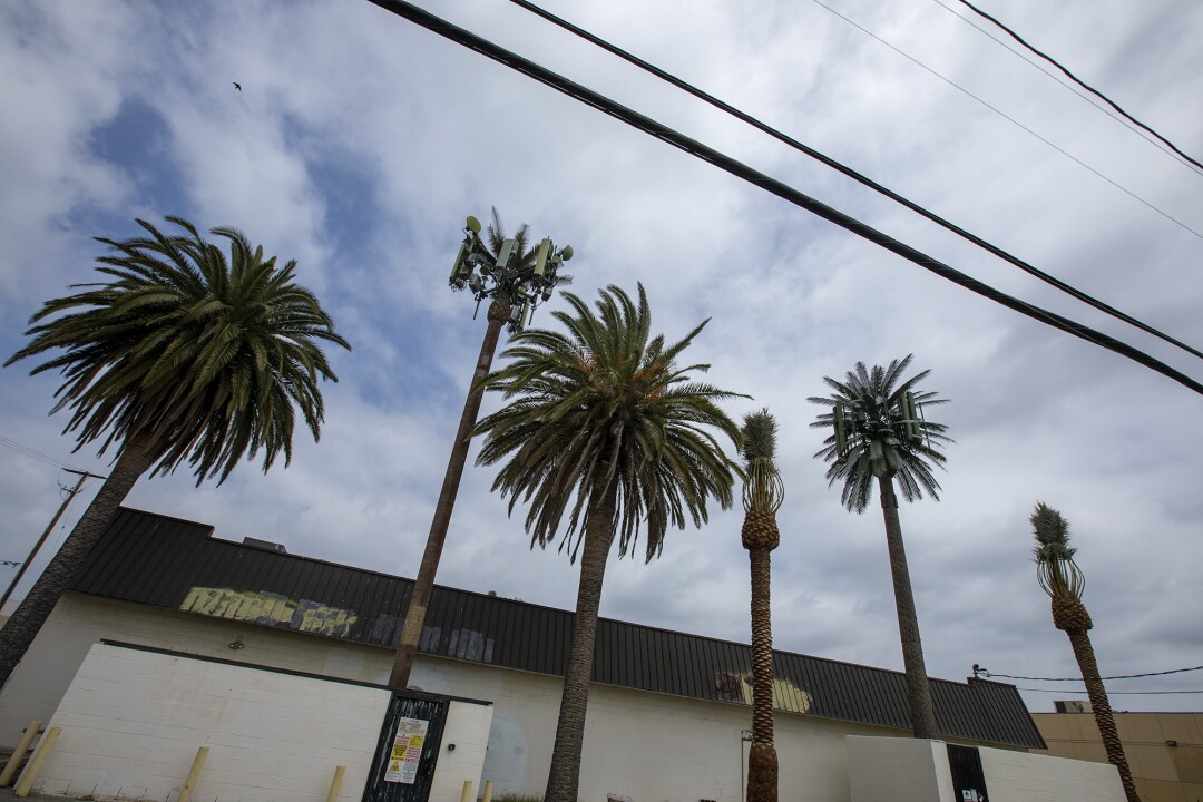 Palm tree cell towers and real trees.