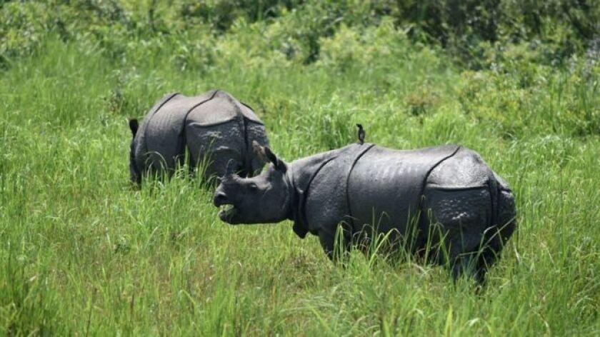 El Parque Nacional Kaziranga, en el noreste de India, es un ejemplo de éxito en cuanto a la conservación de especies en peligro.