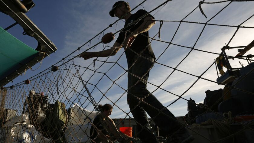 SAN FELIPE, MEXICO--APRIL 9, 2017--Sea Shepherd activists work to break down illegal gill nets and o