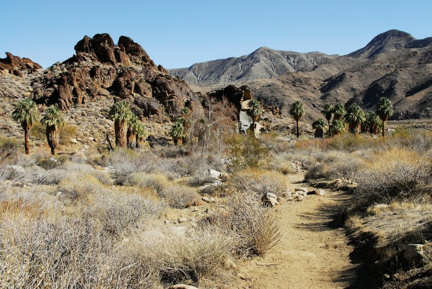 Murray Canyon Trail in Indians Canyons features a year-round running stream populated by native fan palms and lots of dramatic rock formations.