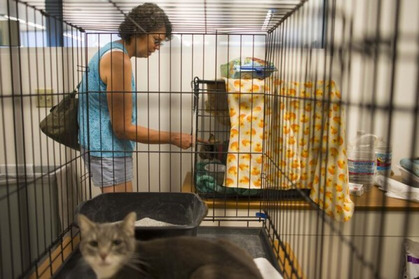 Animal shelter during Yarnell Hill fire