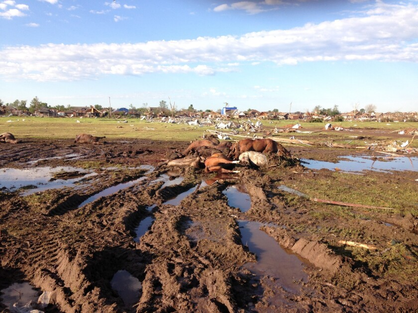 A number of animals did not survive the tornado that hit Oklahoma on Monday, including these horses.