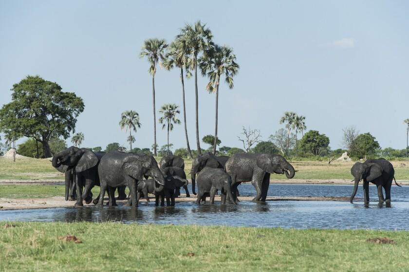 Elephants gather at a watering hole in Hwange National Park, Zimbabwe.