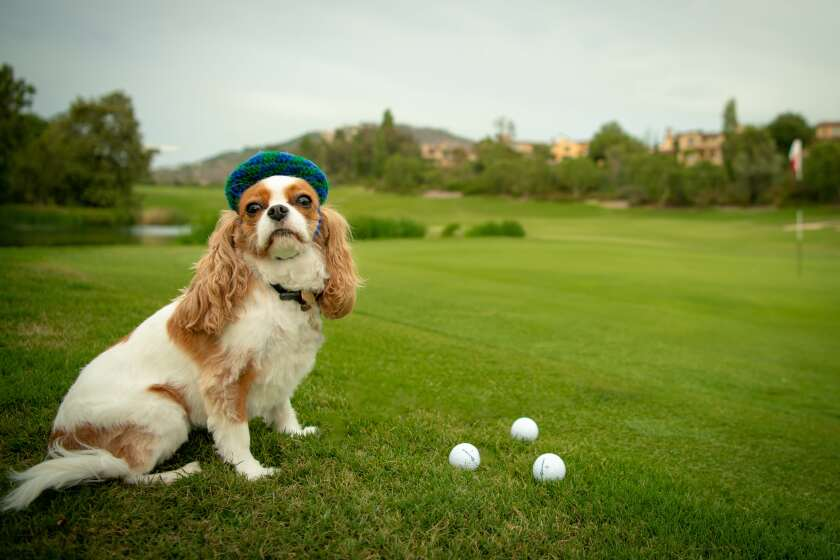 FACE's dog friendly golf tournament will be held on Nov. 4.