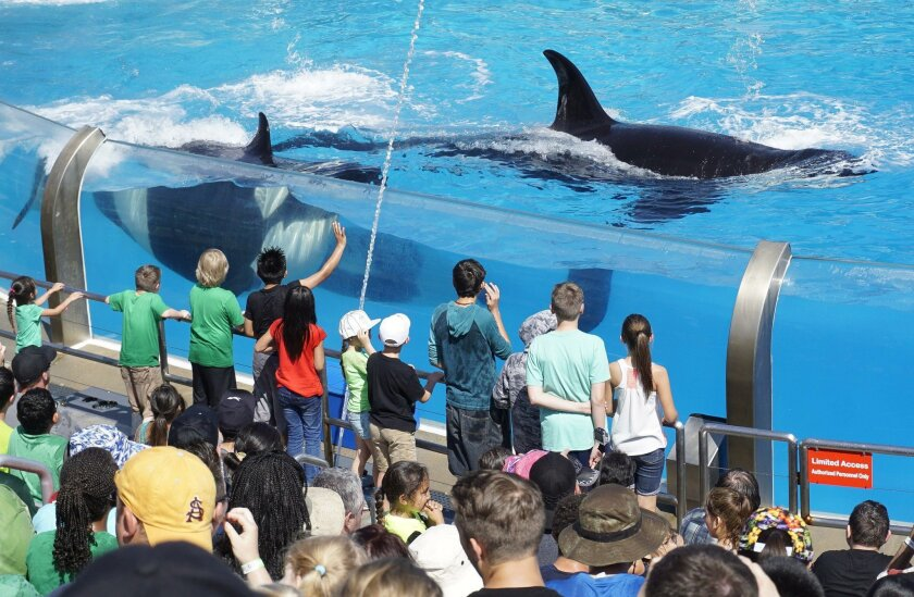 Children get a close look at one of the killer whales performing during SeaWorld's One Ocean show at SeaWorld in San Diego on Thursday.